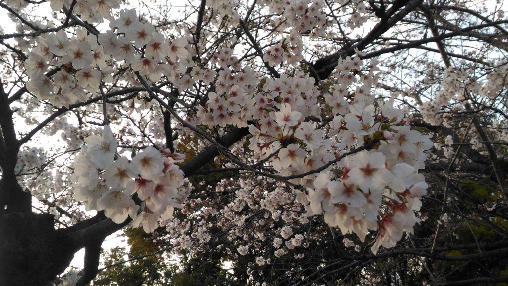 広島平和記念公園その3