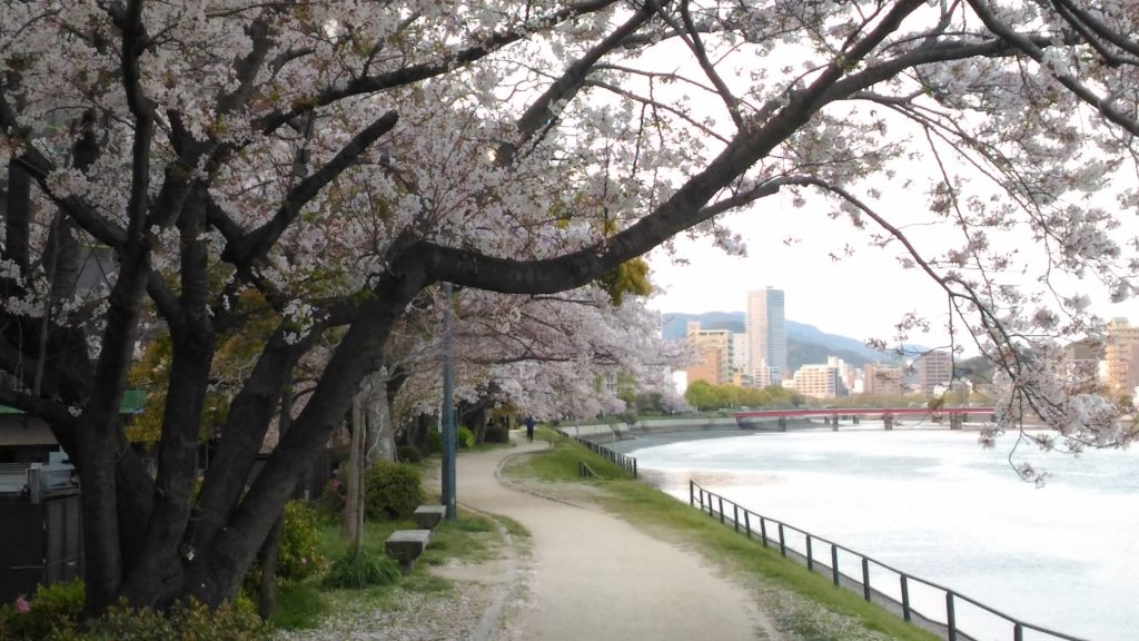 平野橋と桜