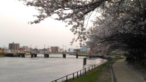 御幸橋と桜