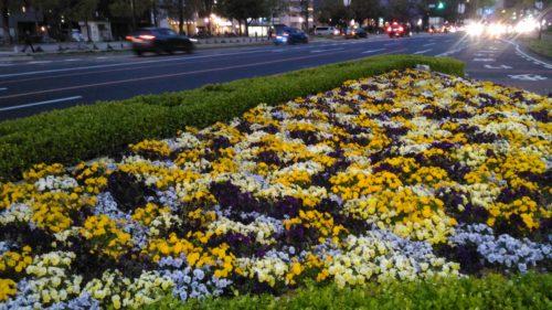 平和大通りのお花