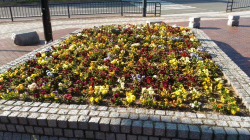 駅前通りのお花