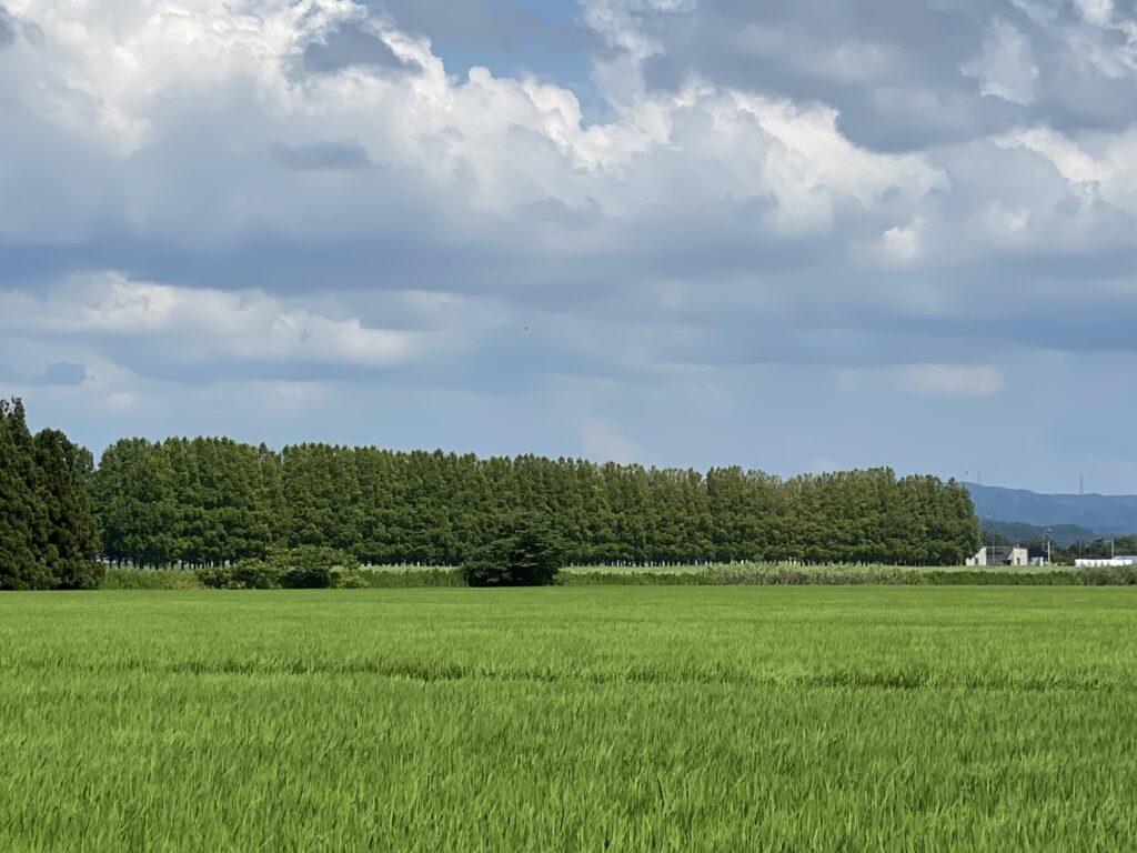河北潟メタセコイア並木 外観