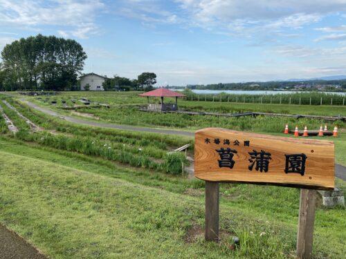 木場潟 菖蒲園